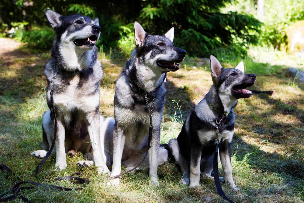 Preliminär Resultatlista samt BIS-hundarna från Torneutställningen